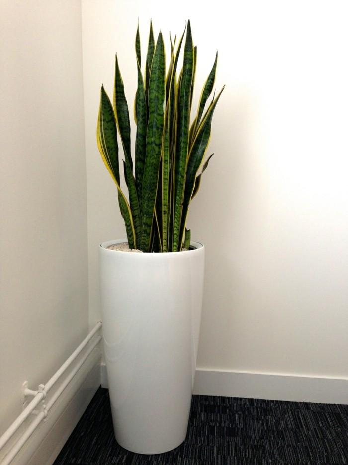 Zimmerpflanzen die gute Wirkung auf Haus und Sinne haben