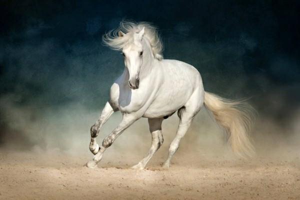 Fall Fantasy Wallpaper 30 Inspirierende Pferdebilder Mit Tipps F 252 R Die