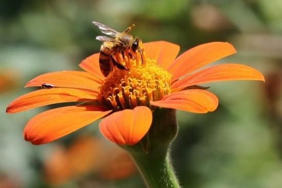 Bienenfreundliche Pflanzen Eine Pracht fr Bienen Grten