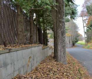Cloistered wall along the road