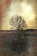 norland-tree-study-03