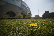 the-dandilion-and-the-arena