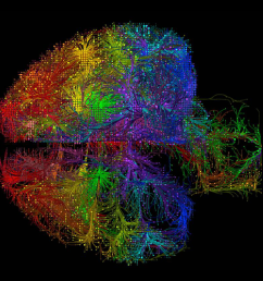 a new analysis of the allen mouse brain connectivity atlas a wiring diagram of the mouse brain s connections shows that long range connections may be  [ 2134 x 1200 Pixel ]