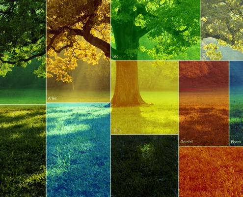 creating a treemap chart in microsoft excel header image of treemap overlayed on a tree