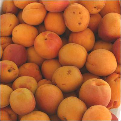 apricot allergy