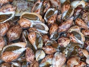 Mollusk Allergy
