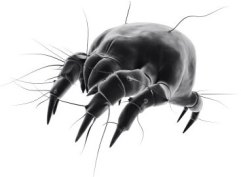 dust mite facts