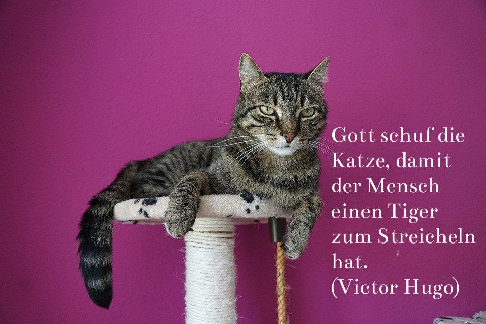 Lustige Katzenbilder & Sprüche (Teil 2)
