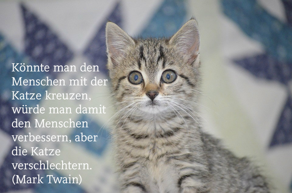 Lustige Katzensprüche und -bilder zum Teilen (Teil 5)