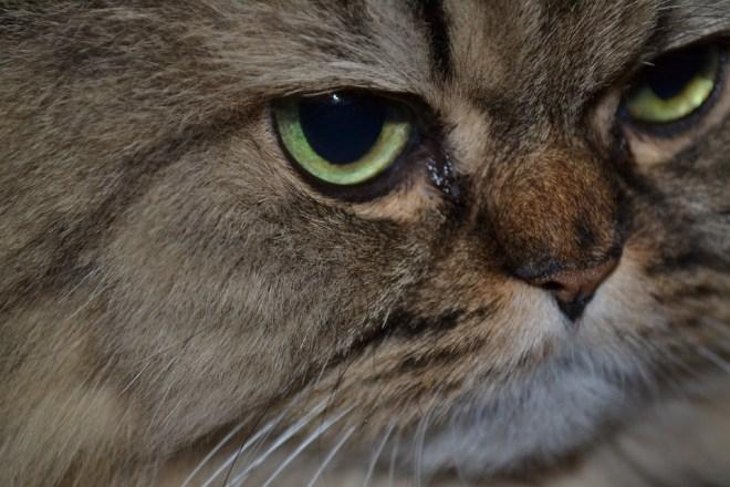 Tränende Katzenaugen