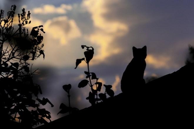 älteste Katze der Welt