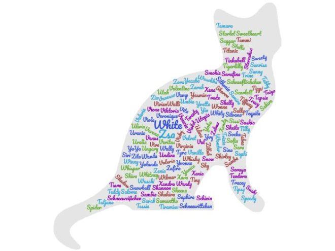 Bild mit Katzennamen