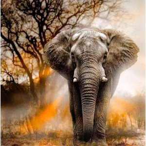 Happy Painter® Diamond Painting volwassenen Olifant in Schemer - 40x50cm