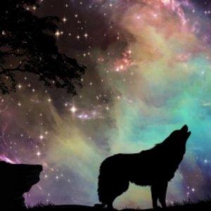 Wolf met sterren - Diamond Painting 40x30 cm (volledige bedekking) inclusief premium tools