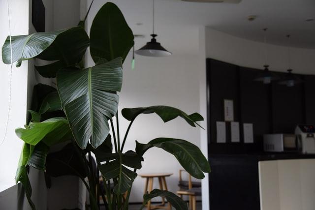De voordelen van kamerplanten