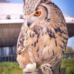 roofvogels miss hawks allesvoorevents.nl