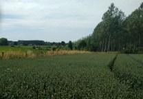 Pajottenland , Gaasbeek