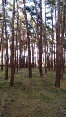 In de bossen van Kasterlee 19,50 km
