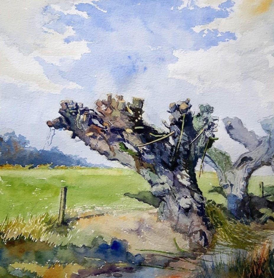 Watercolour, Pollard Willow in the Dutch flood plain of the River Rhine.