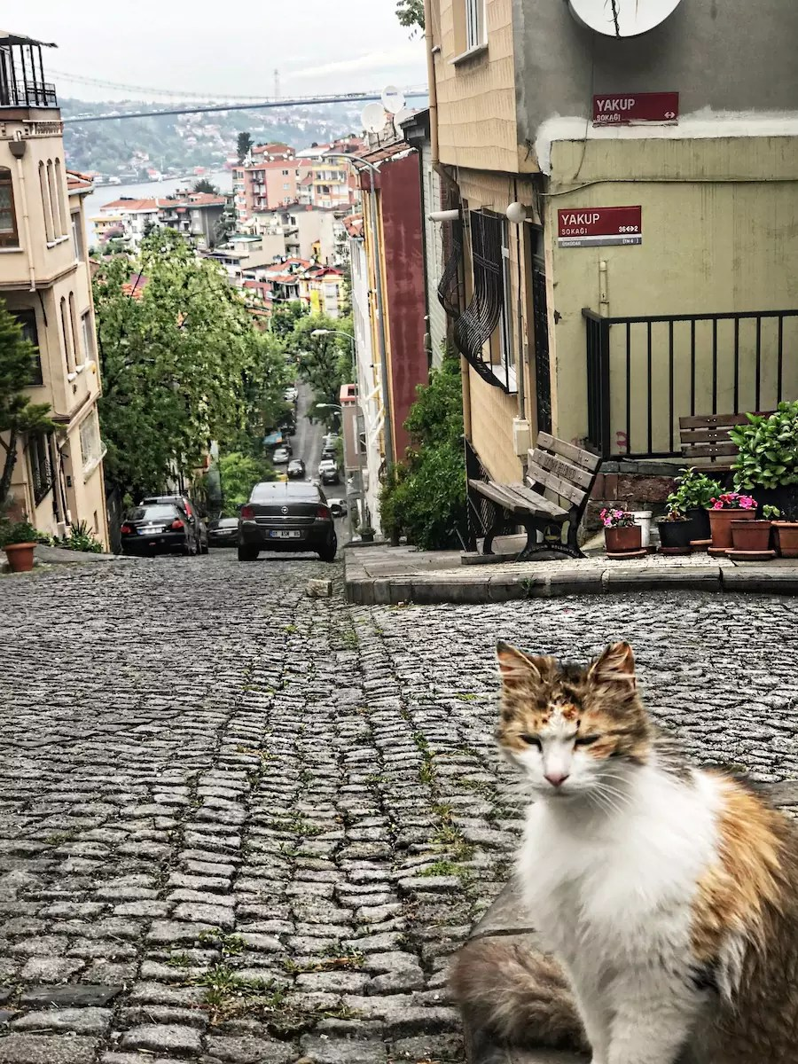 tourist-guide-for-istanbul-5-hidden-places-in-istanbul-aley-girl-travel-fashion-technology-blog-kuzguncuk-kedi-fotograflari