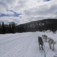 dogsledding near Algonquin Park