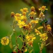 """Heleeniium """"Helena Yellow"""" 2014"""