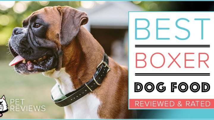 Top 5 Best Dog Foods For Boxers in 2021 Reviews