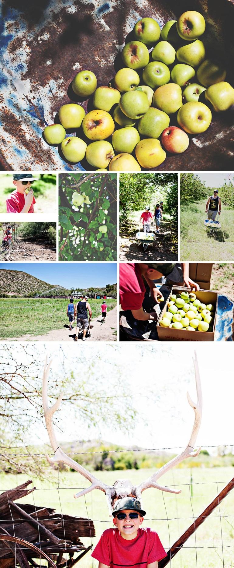Apple+pickingApple+picking