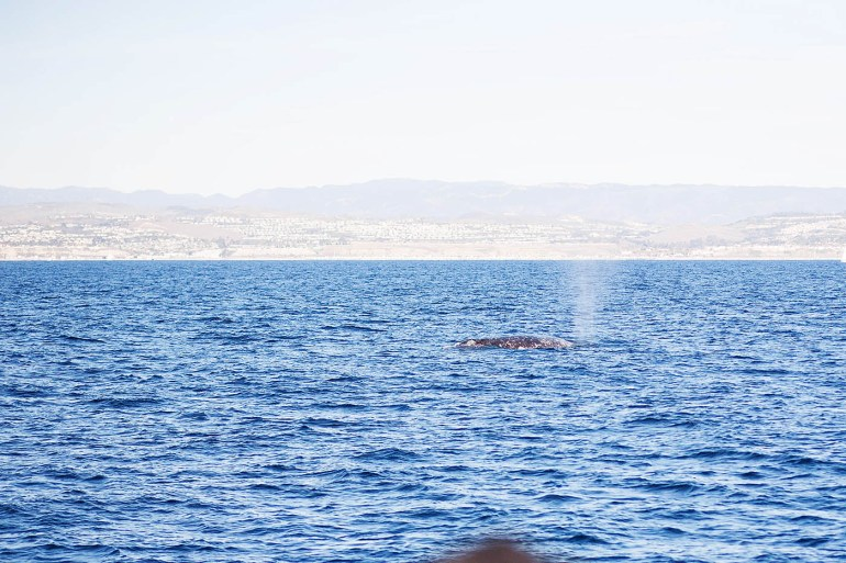Dana Wharf Sportfishing Whale Watching