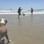 Huntington Dog Beach