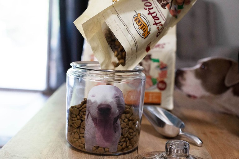DIY personalized photo dog food jar - allforthememories.com