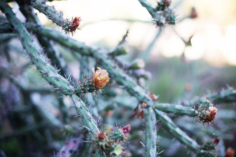 The desert - Allison Waken from All for the Memories