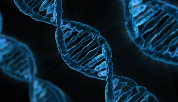 What is the Role of DNA?