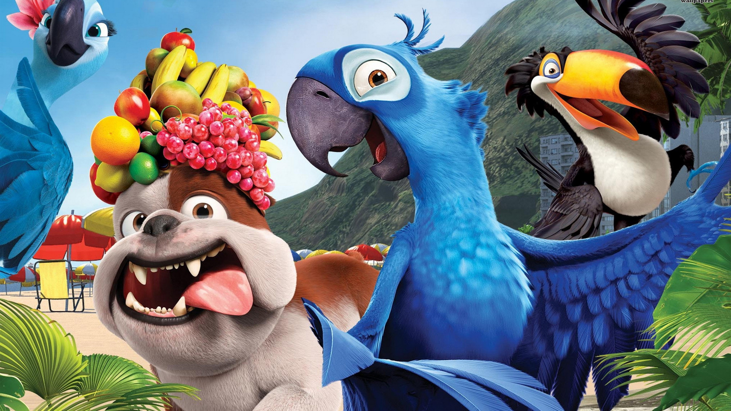 Could go either way, tbh. Rio 2 Animated Movie Amazing HD Wallpapers 2015 - All HD ...