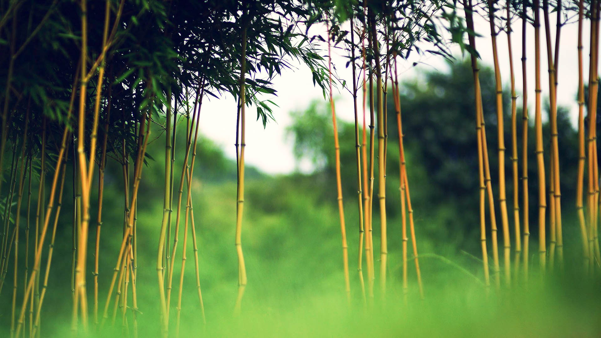 bamboo new hd wallpapers