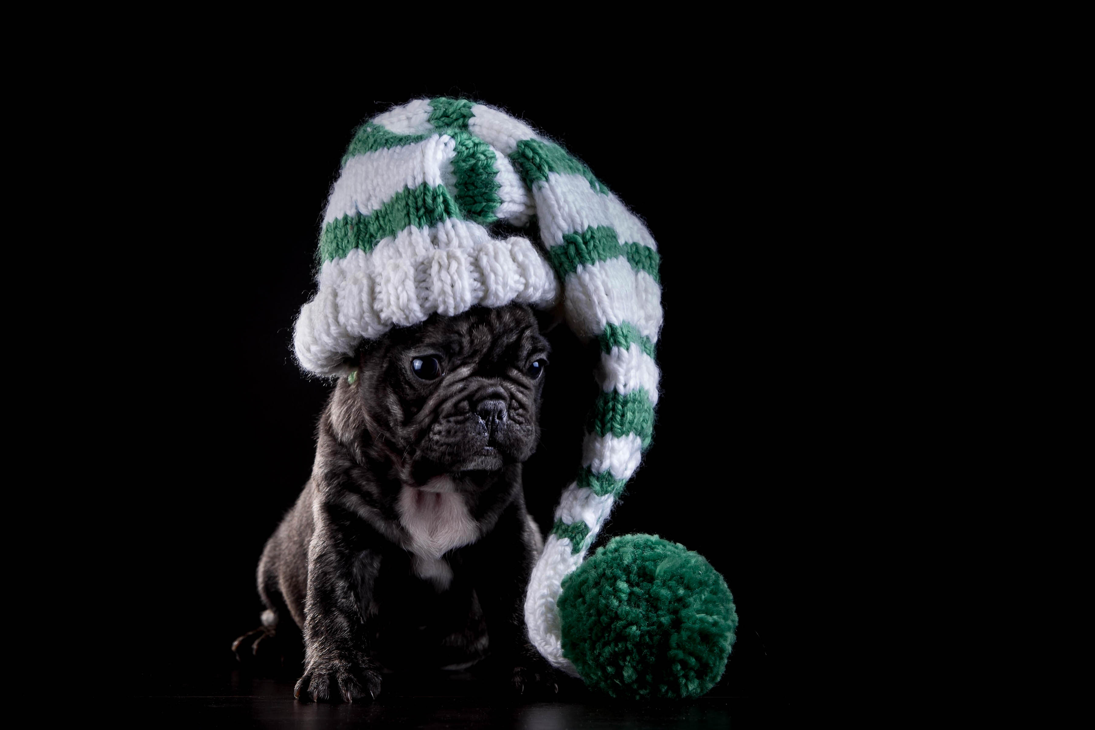 Cute Pug Wallpapers For Iphone French Bulldog Hd Wallpapers In High Resolution All Hd