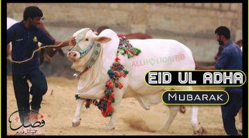 Eid Ul Adha 2019