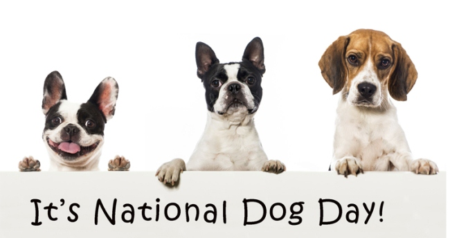 Its National Dog Day