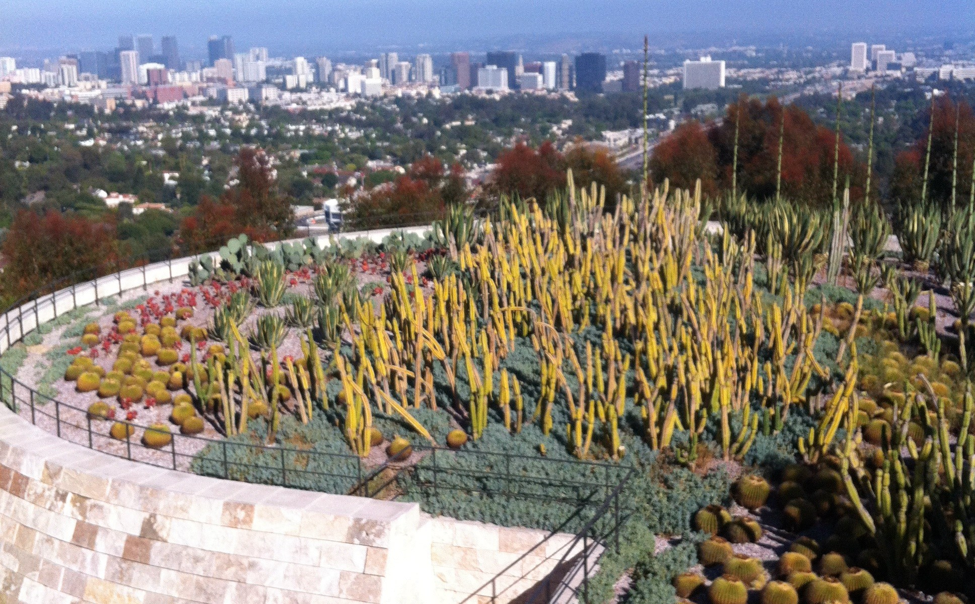 Getty Cactuses and LA Skyscrapers
