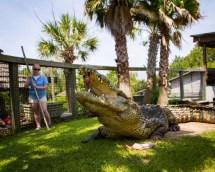 Utan Crocodile Myrtle Beach