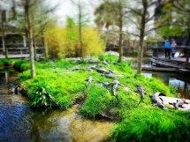 Alligator Adventure Reptile Capital Of World