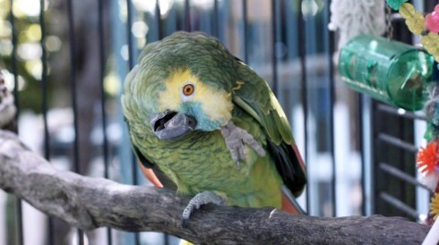 A rescue bird from The Lily Sanctuary