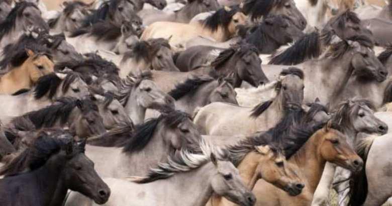 Rabid Horses In Germany! - 858×536