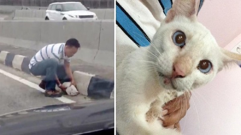 Man Risks Own Life To Save Cat Trembling In Fear In the Middle of Busy Highway