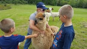 Fluffy Baby Alpaca