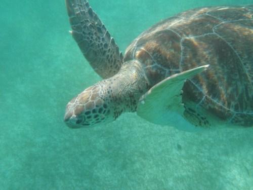 Secrets Akumal snorkeling