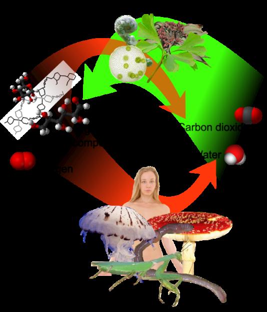 cellularenergyenergycycling