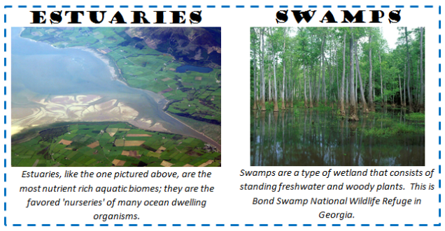 ecologyestuariesandswamps.png