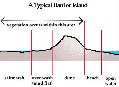 Day 93 barrier reef.jpg