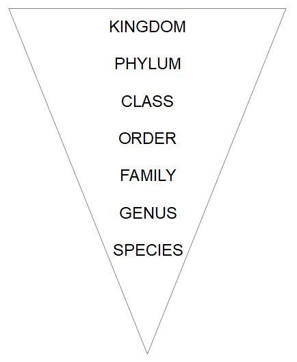Classification of Lemurs
